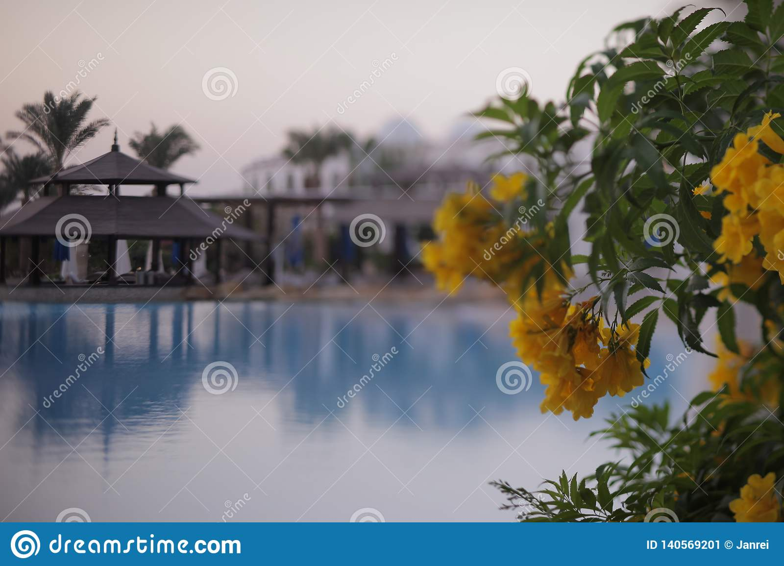 Heavenly place - relaxing by the pool with flowers on a weekend holiday in Egypt