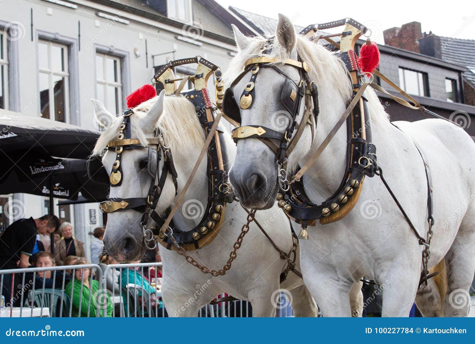 Heavy Horses Parade Lennik Editorial Stock Image Image Of Flemish 100227784