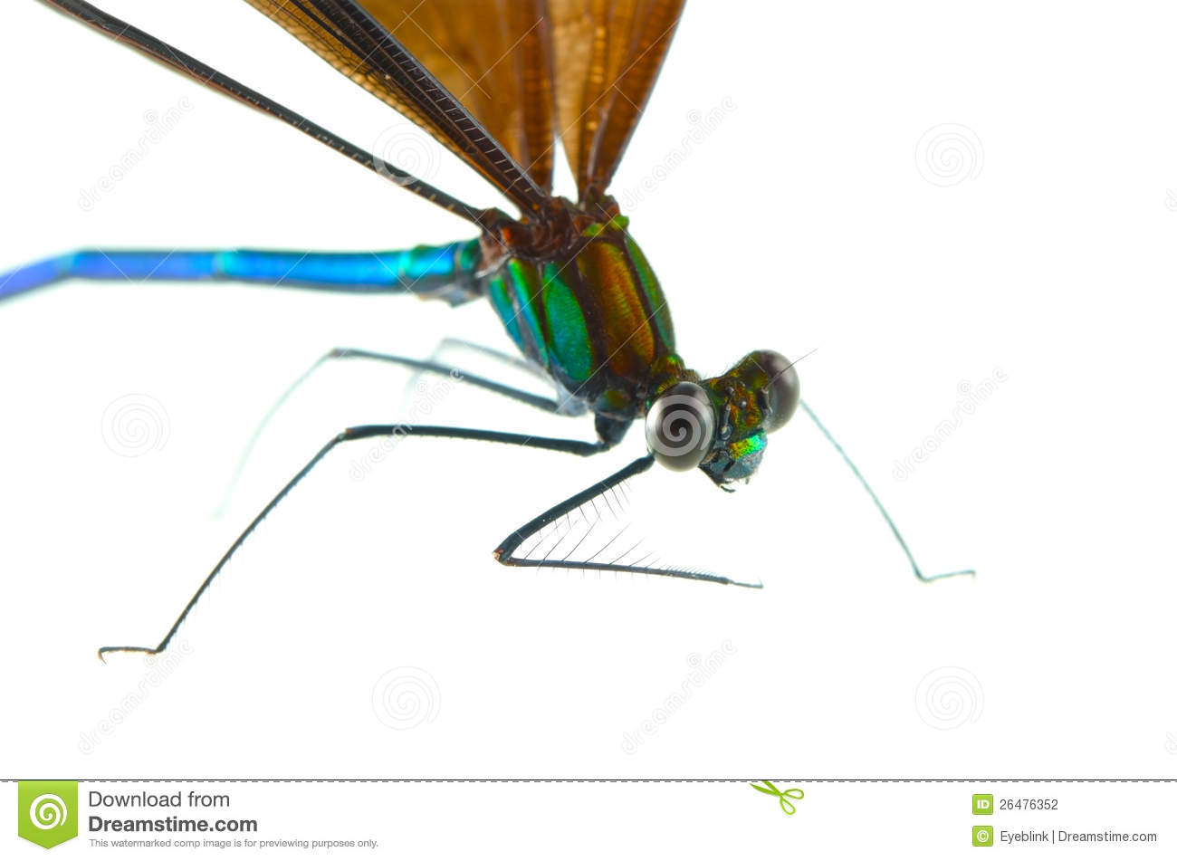 Heban Jewelwing