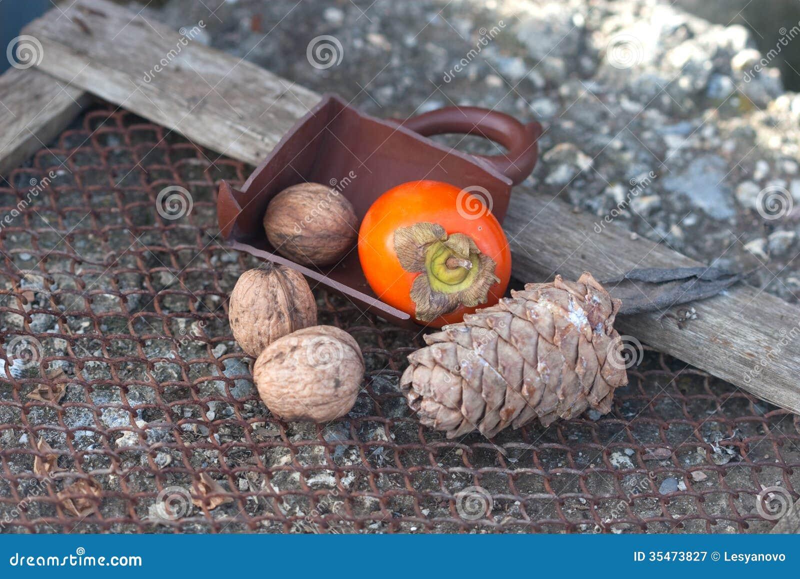 Heban, orzech włoski, jedlinowy rożek