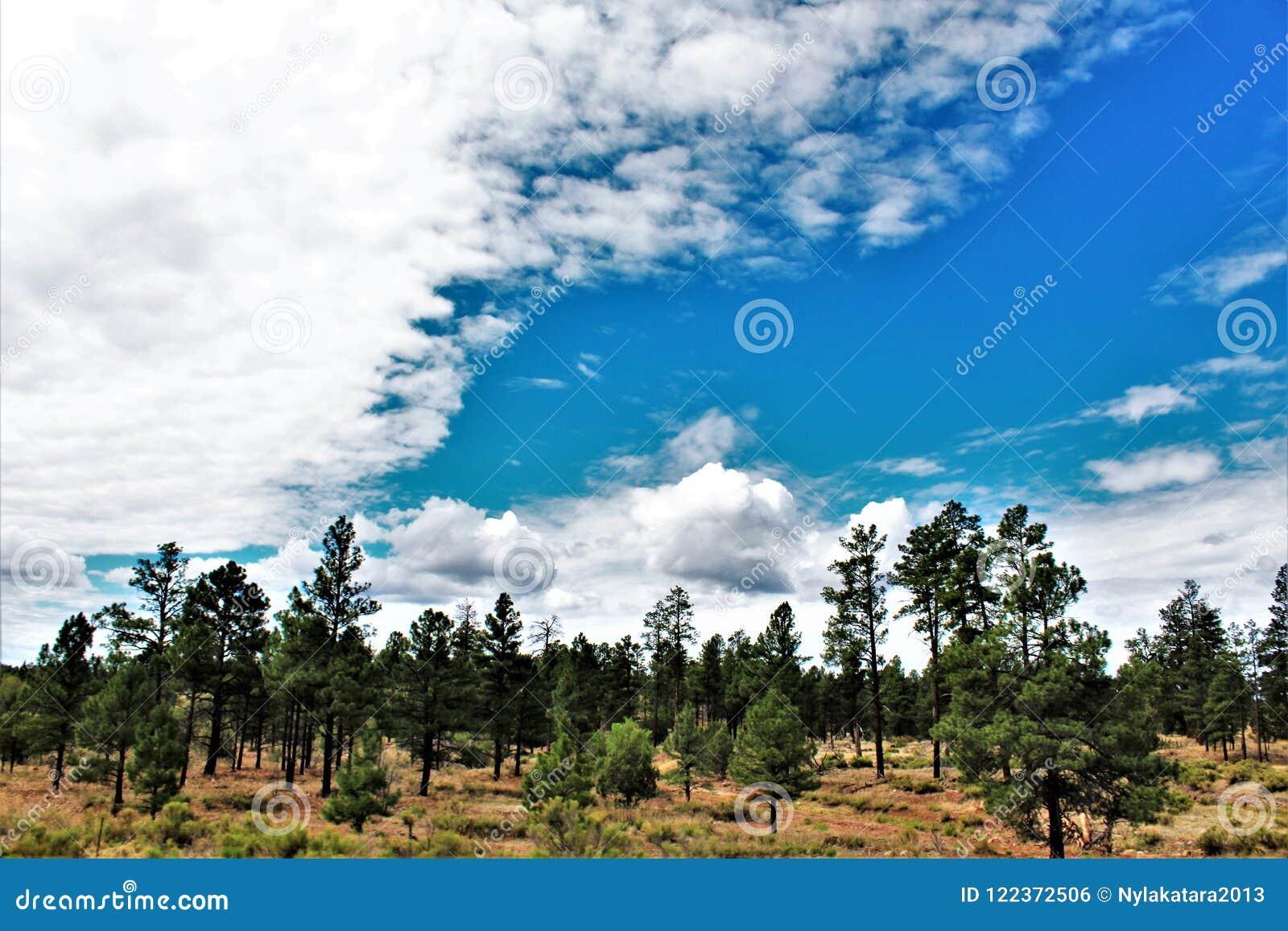 Heber Overgaard,纳瓦霍县, Sitgreaves国家森林,亚利桑那,美国