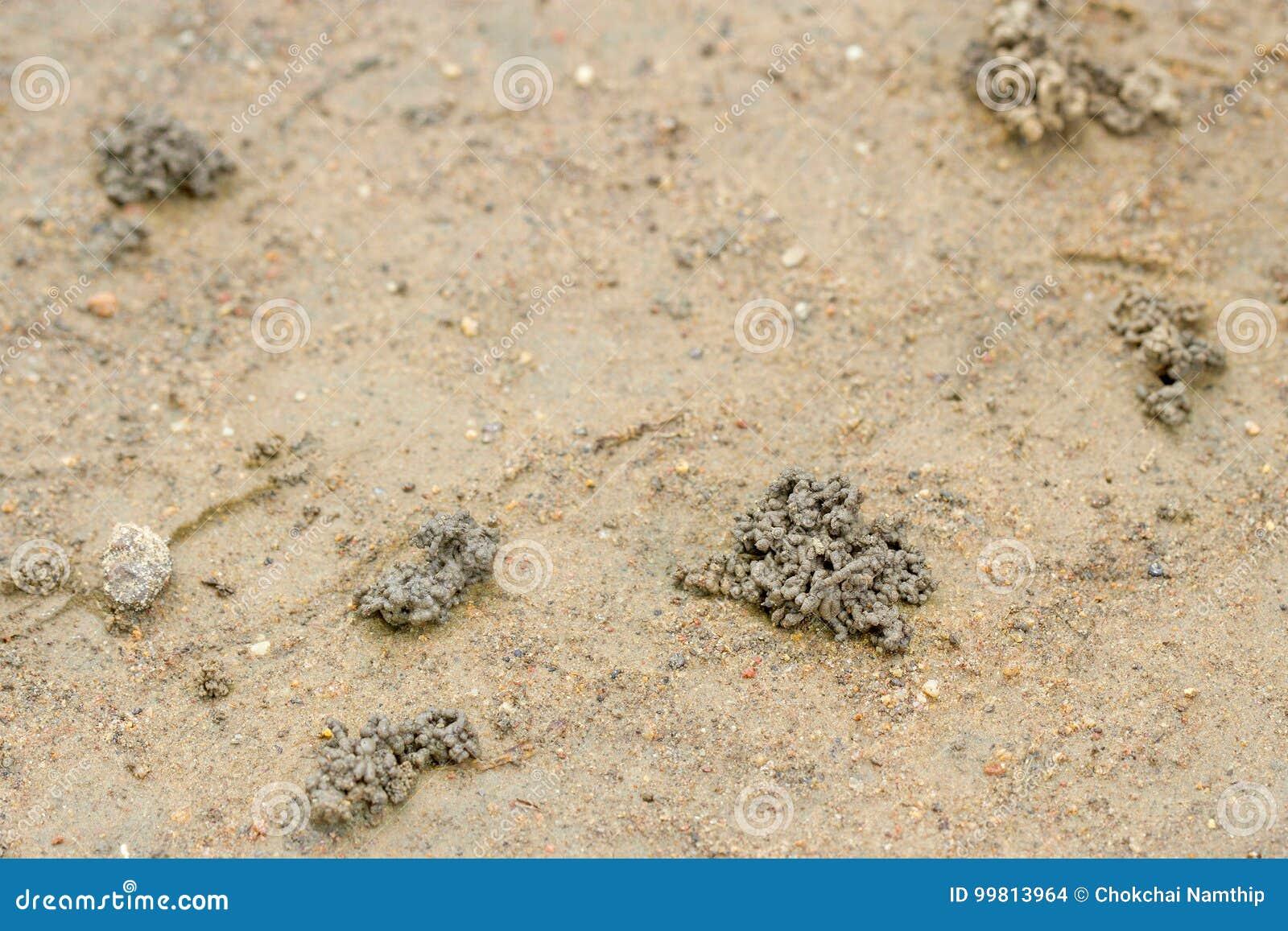 heces de gusanos