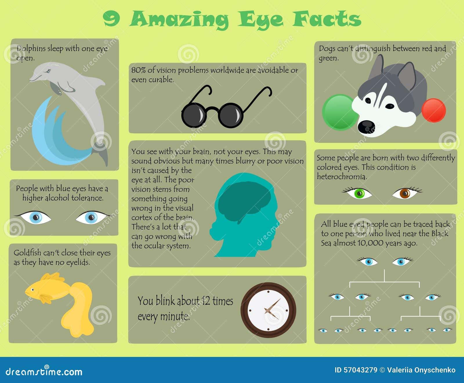 Hechos del ojo de Infographic