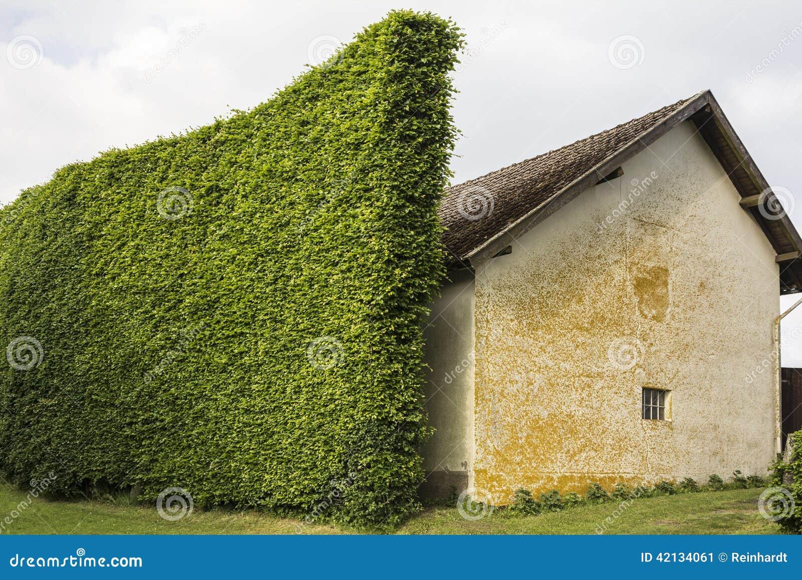 Hecke als Windschutz stockbild Bild von hecke buche