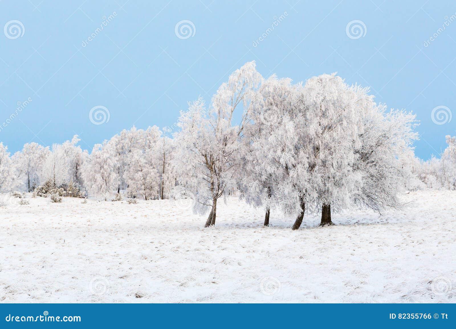 Hed med träd och frost