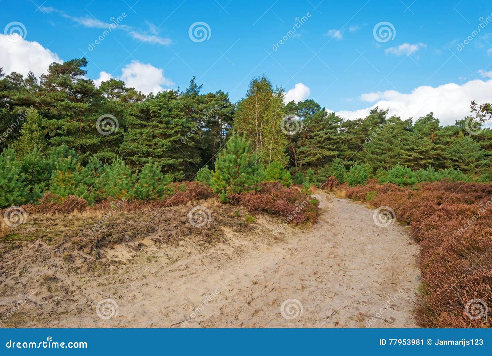 Hed som klänger en skog