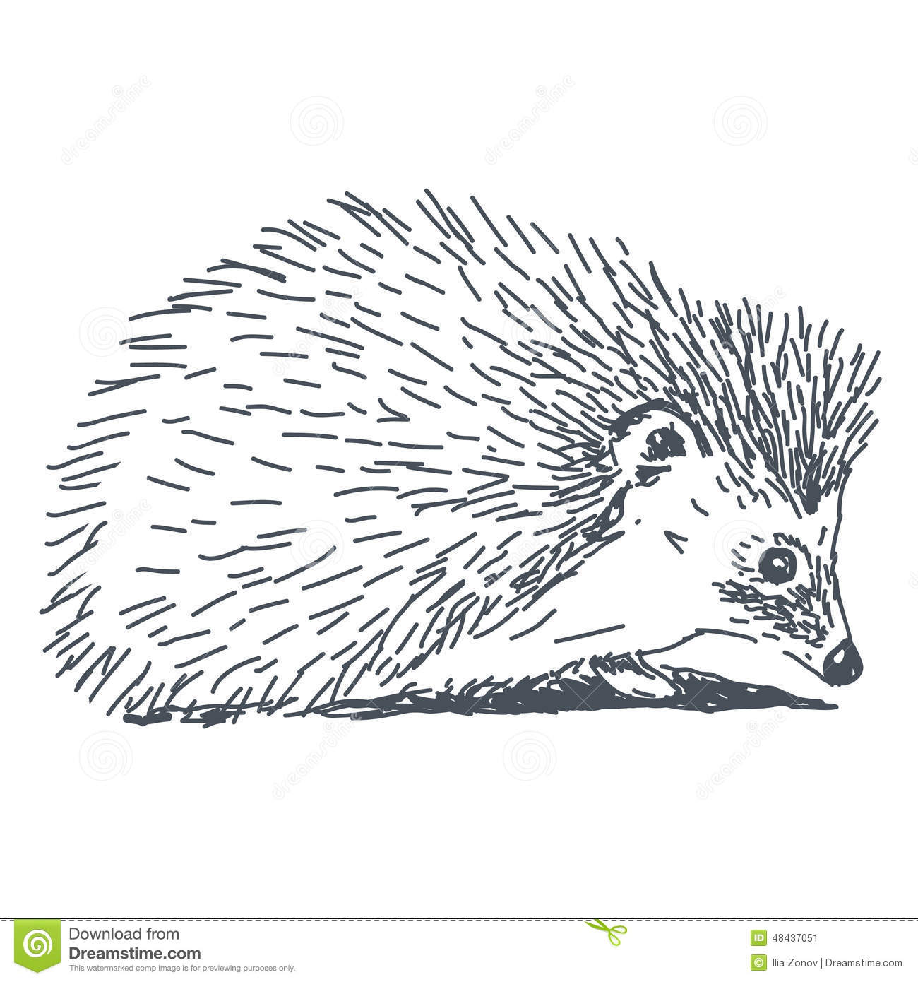 Line Drawing Hedgehog : Hedgehog drawing stock illustration image