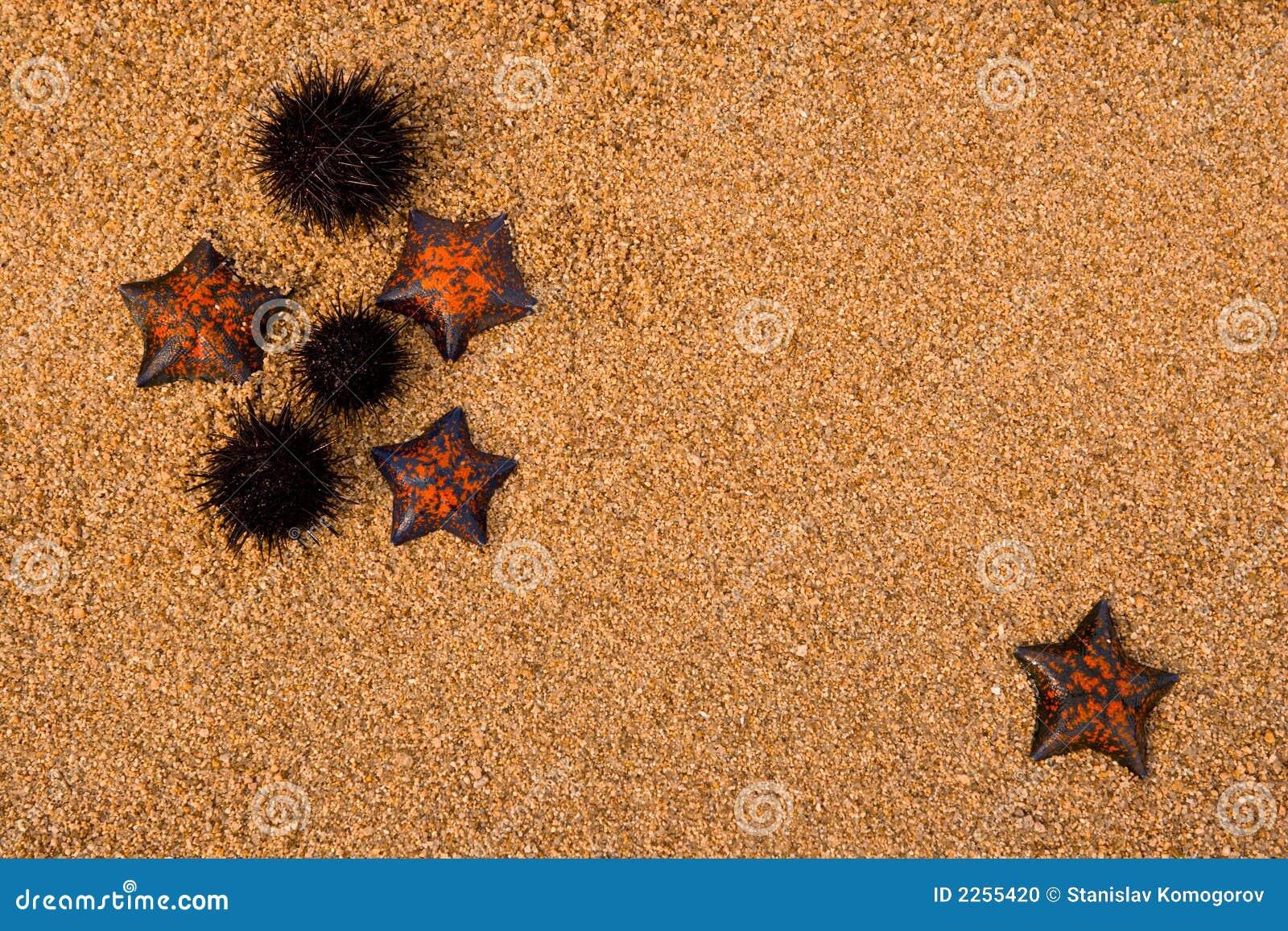 Hedgehogs e starfich