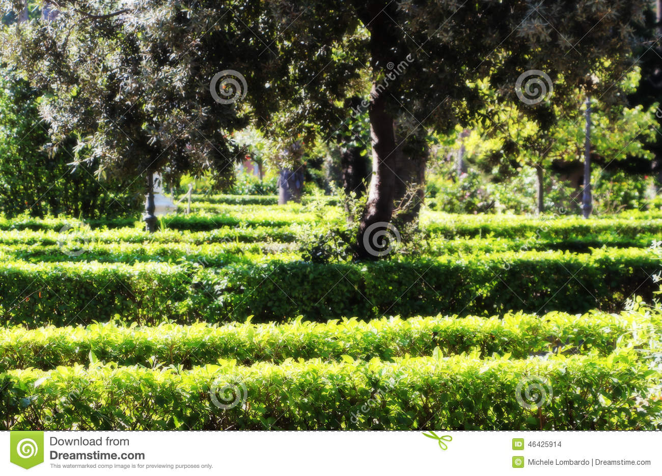 Hedges In A Garden Background Stock Photo Image 46425914