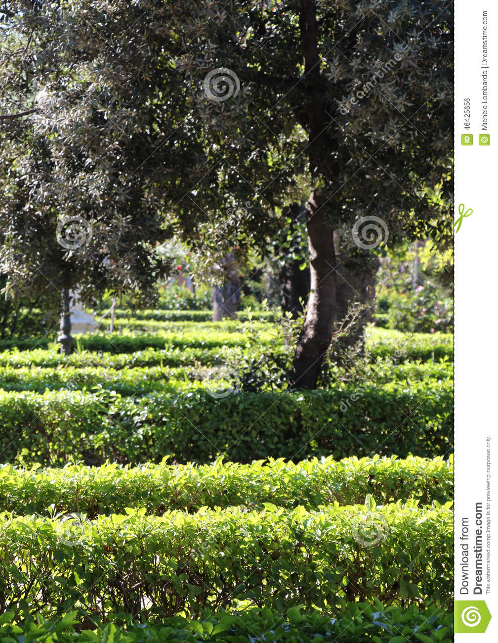 Hedges In A Garden Background Stock Photo Image 46425656