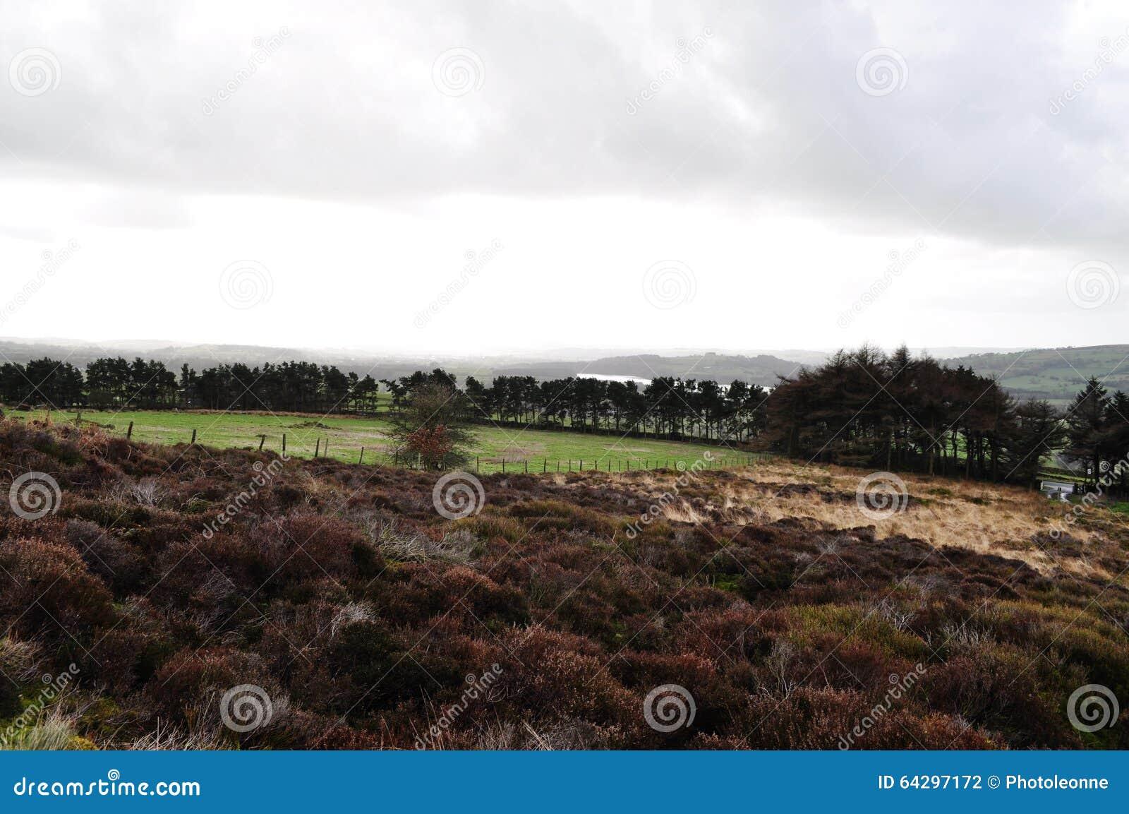 Hedland i gräs för vatten för staffordshire bräkenträd