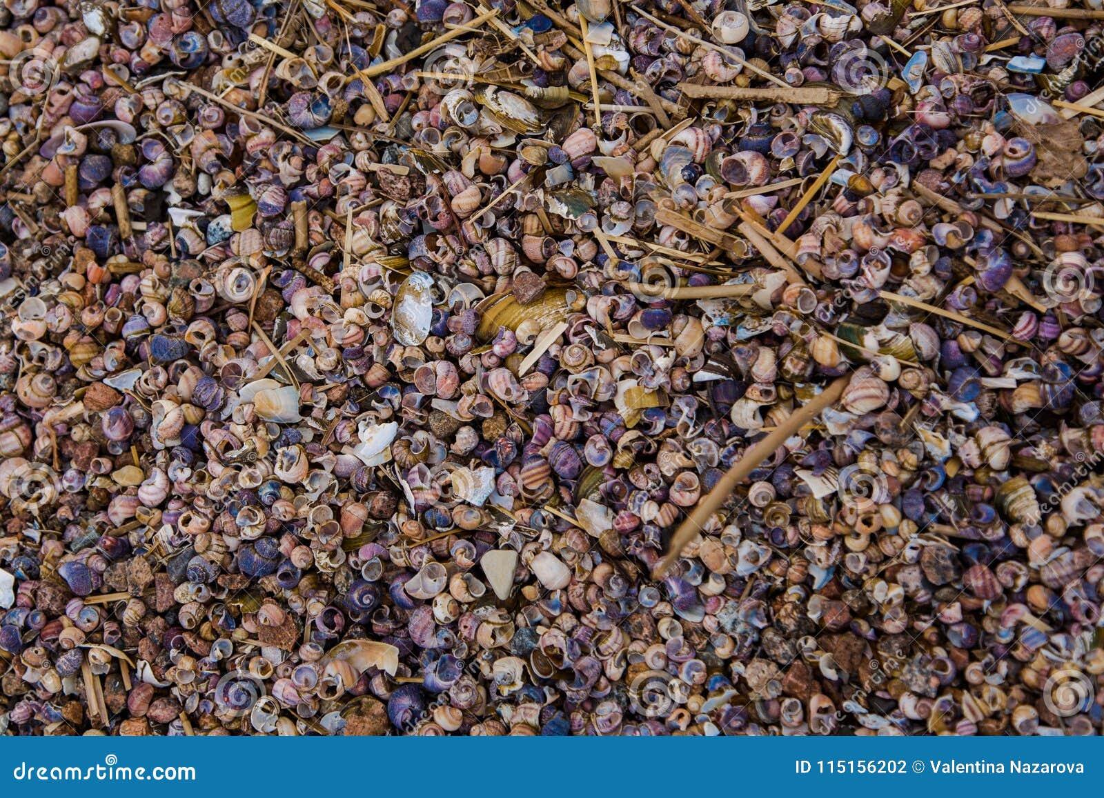 Heel wat kleine shells