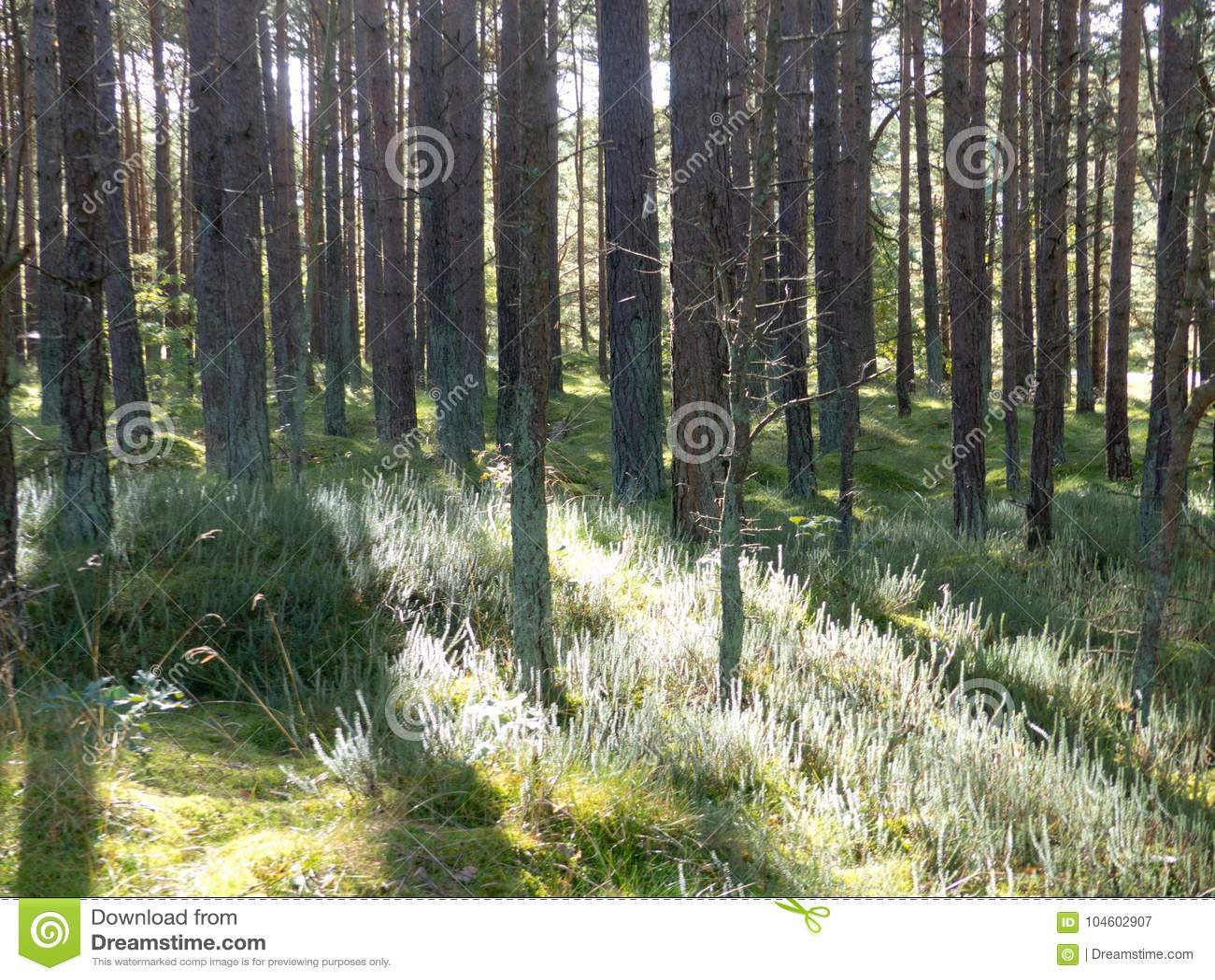 Heide im Holz, Heideholzwaldniederlassungsbaumabschlussnahaufnahmelichtdämmerungsäste treeebranches Sonne