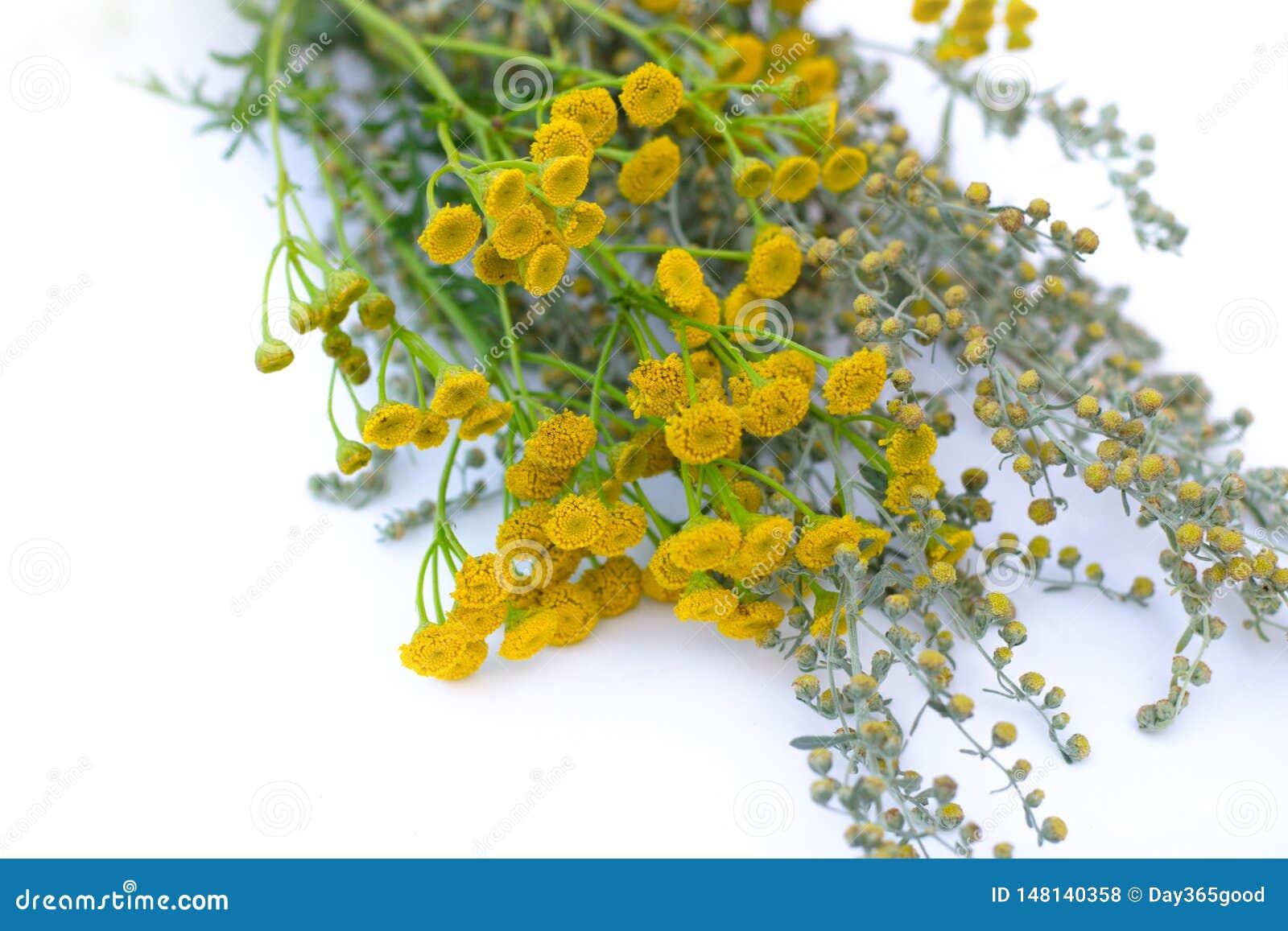 Heilende Kr?uter Heilpflanze- und Blumenblumenstrauß des Wermuts, Tansy Bl?hender Absinth Medizinische Anlage Sieht wie einer Blu
