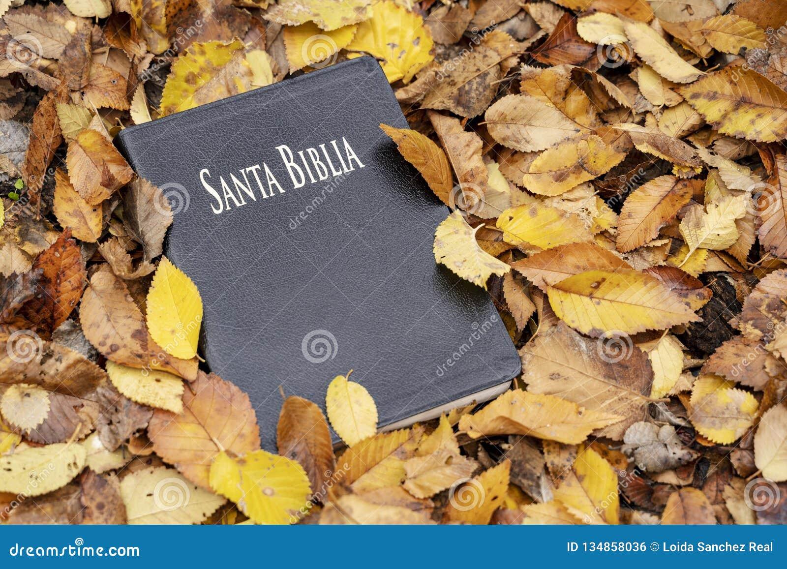 Heilige bijbel E