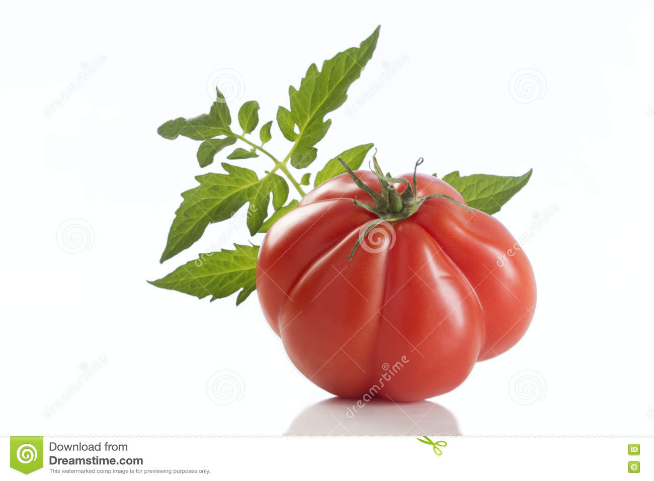 Heirloom Red Tomato, with leaf