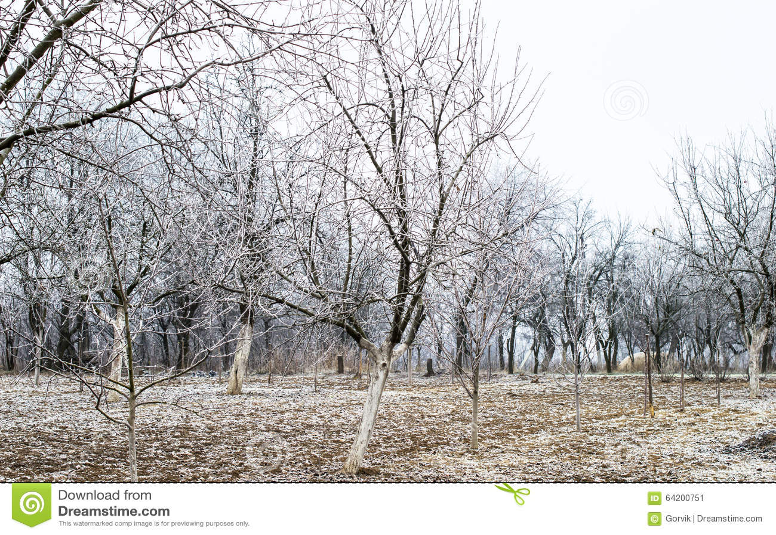 Helada blanca en árboles