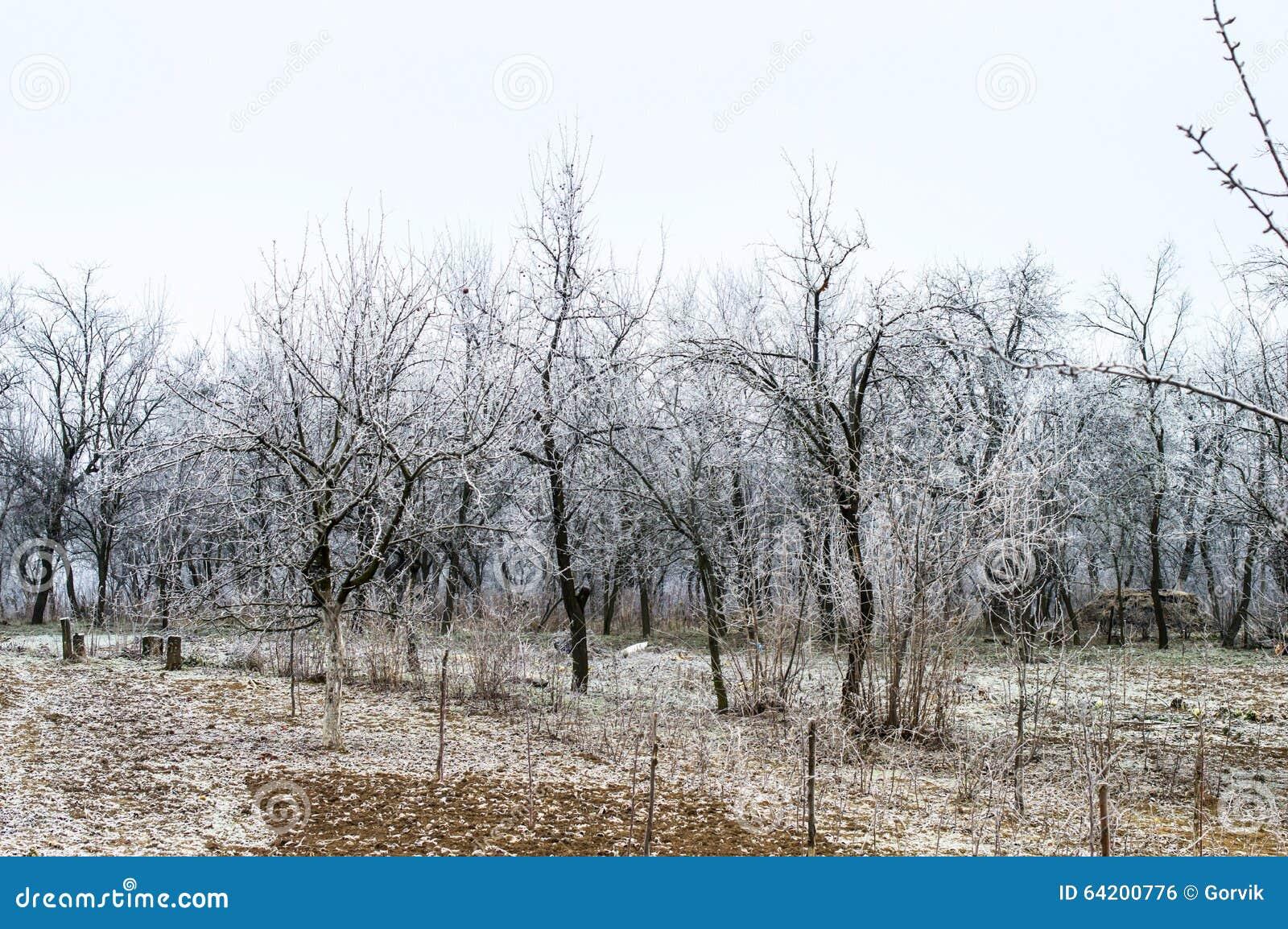 Helada blanca en árboles en el jardín