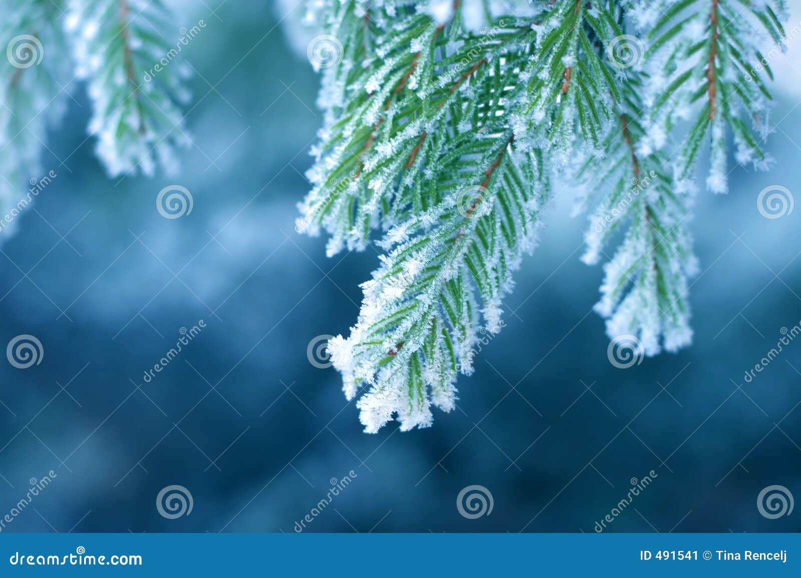 Helada en pino