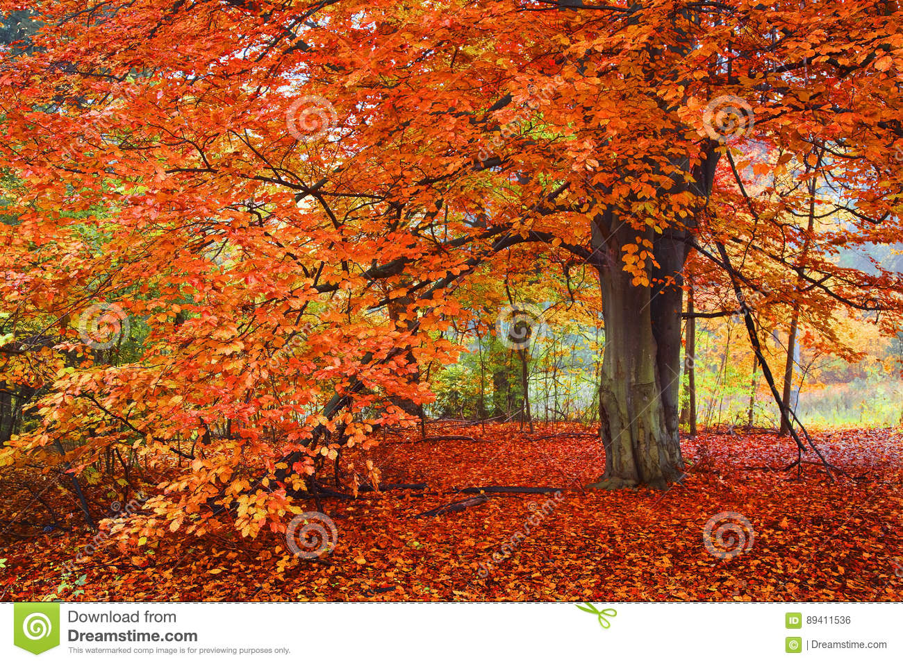 Helder Autumn Colors, Boom in het hout