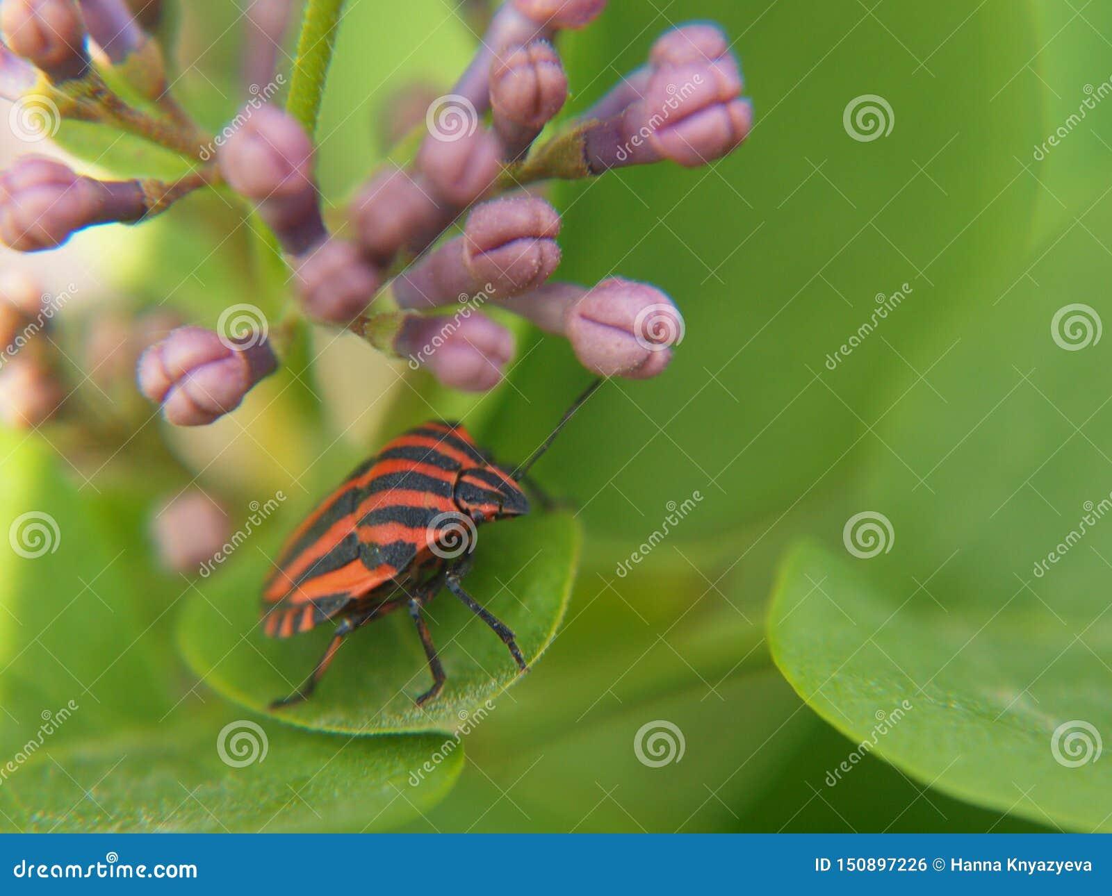 Helder insect op sering