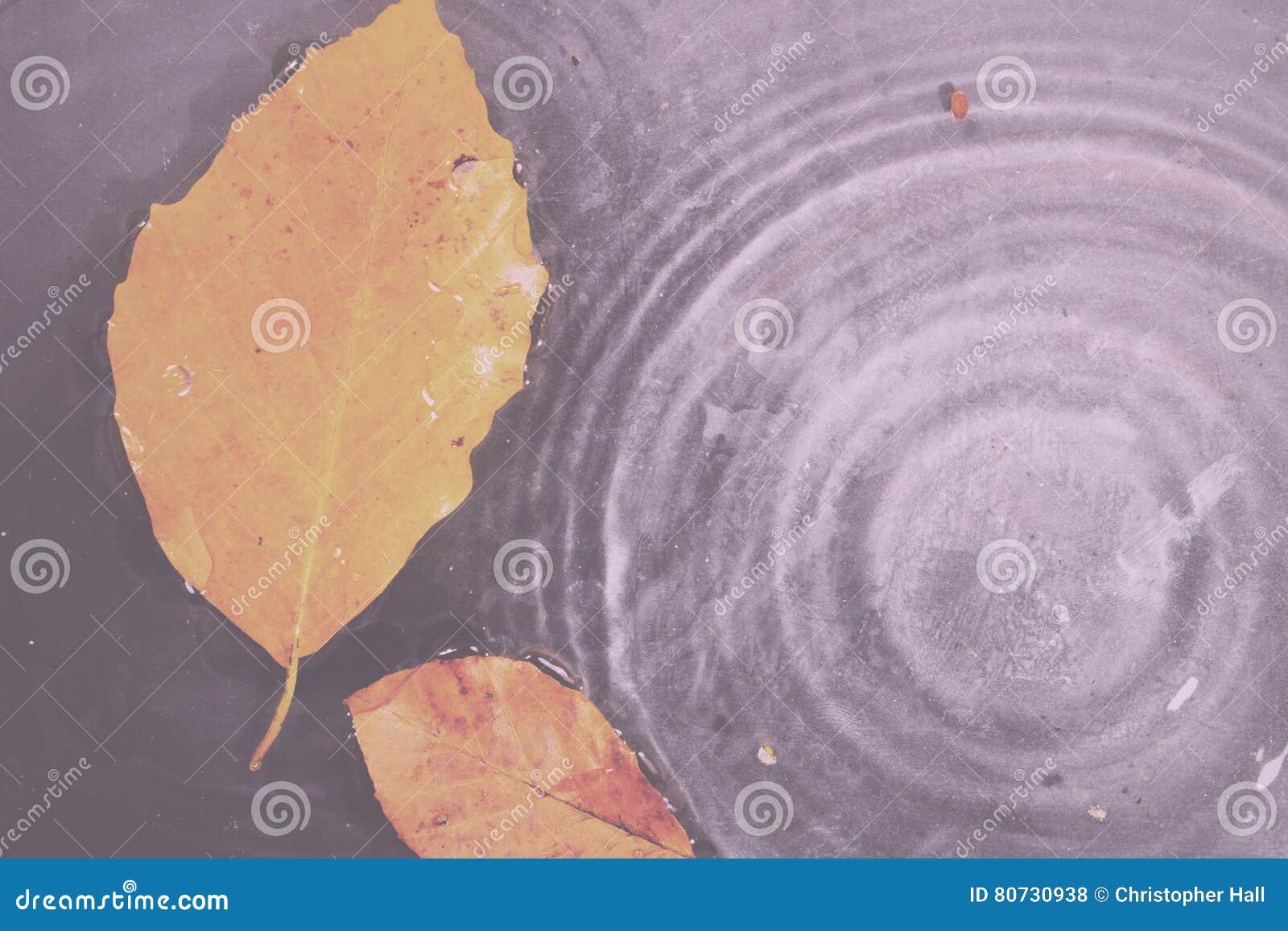 Helder kleurrijk de herfstblad die in water Uitstekende Retro Fil drijven