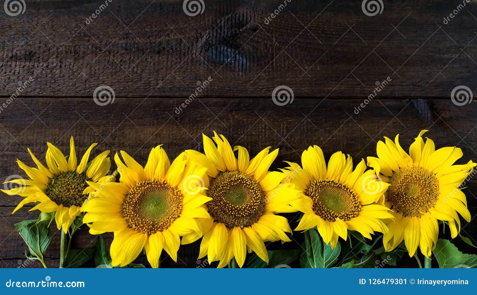 Heldere gele zonnebloemen op natuurlijke rustieke textuur houten raad