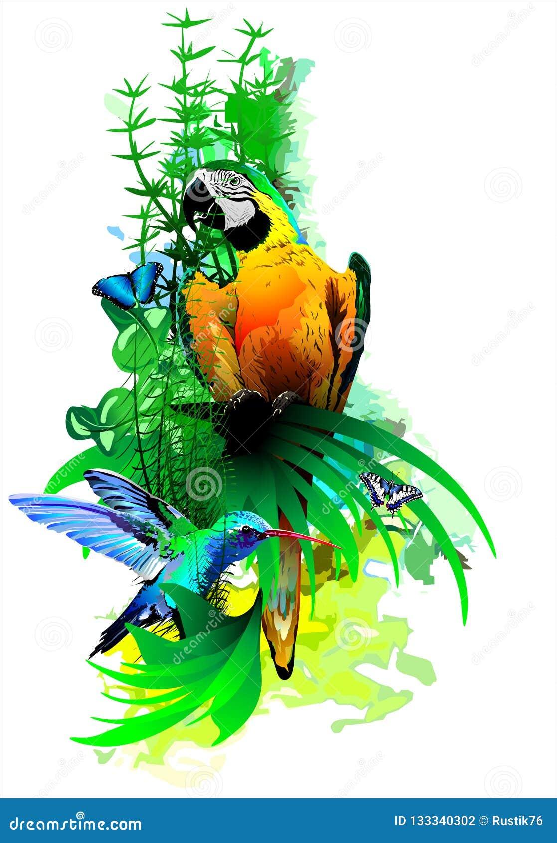 Heldere tropische vogels op een witte achtergrond