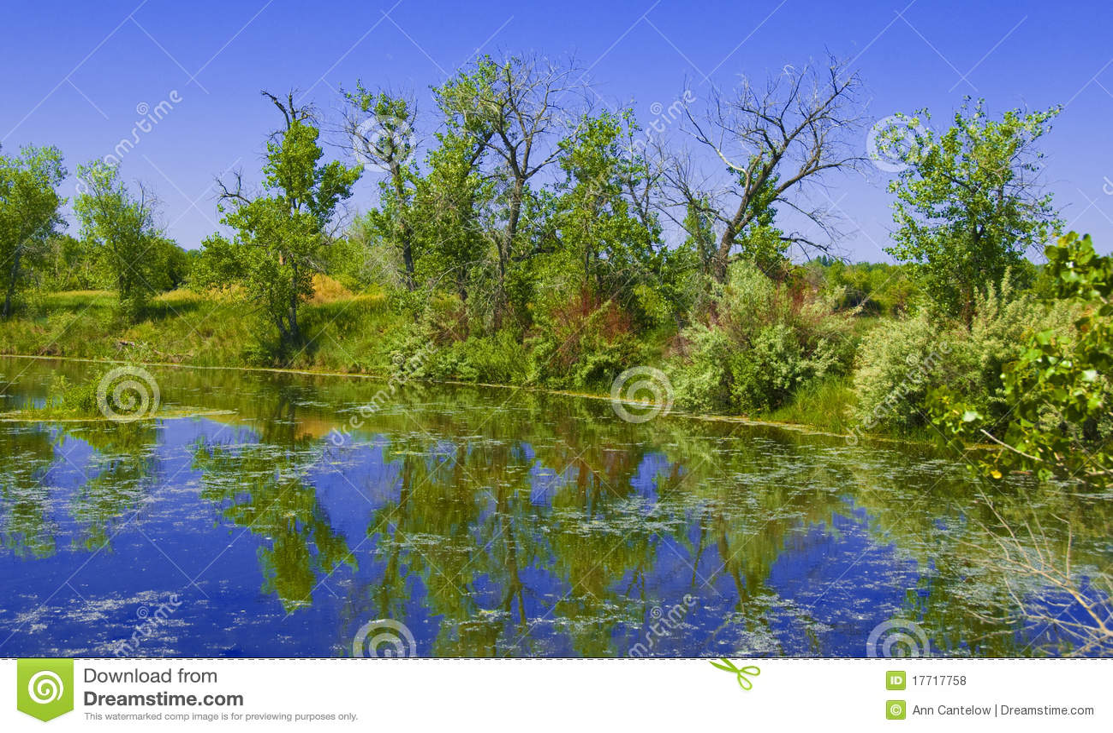 Heldere vijver op de prairie stock foto afbeelding bestaande uit