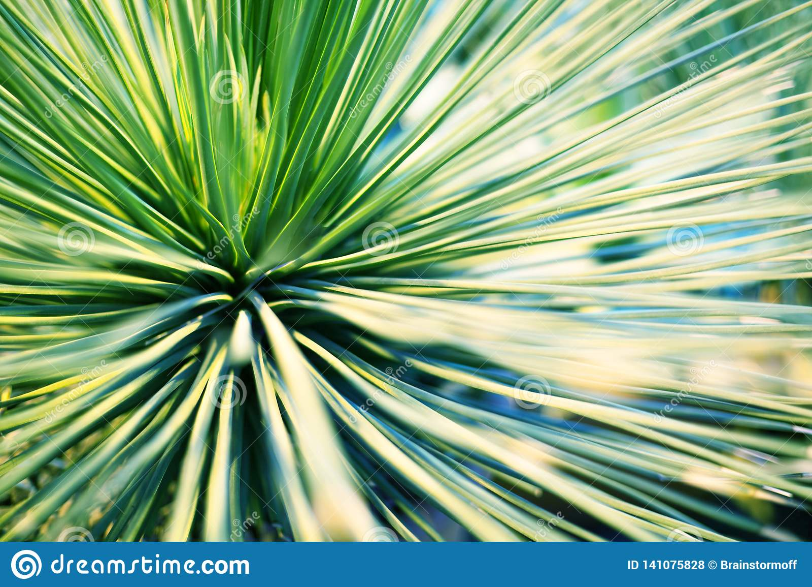 Heldergroene bladeren van palm of sier houseplant vage achtergrondclose-upmacro