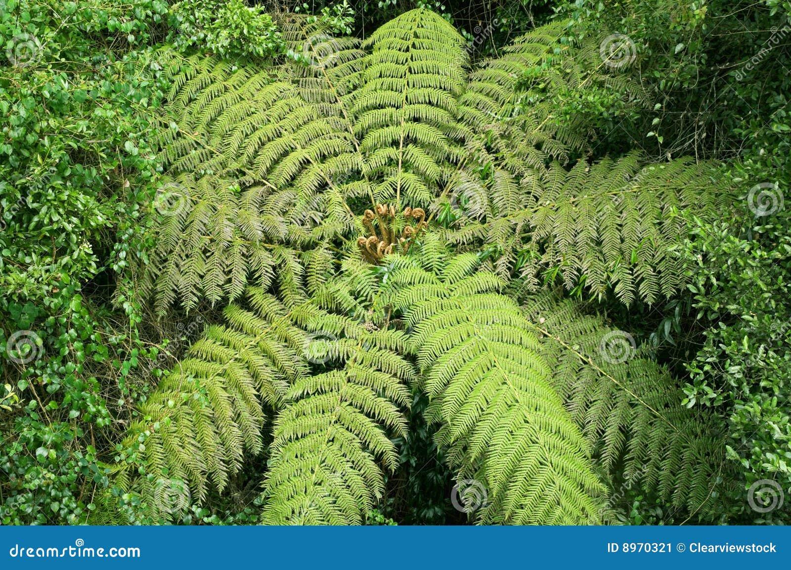 Helecho de árbol en la selva tropical