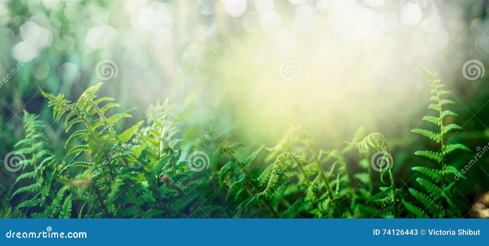 Helecho en bosque tropical de la selva con la luz del sol, fondo al aire libre de la naturaleza