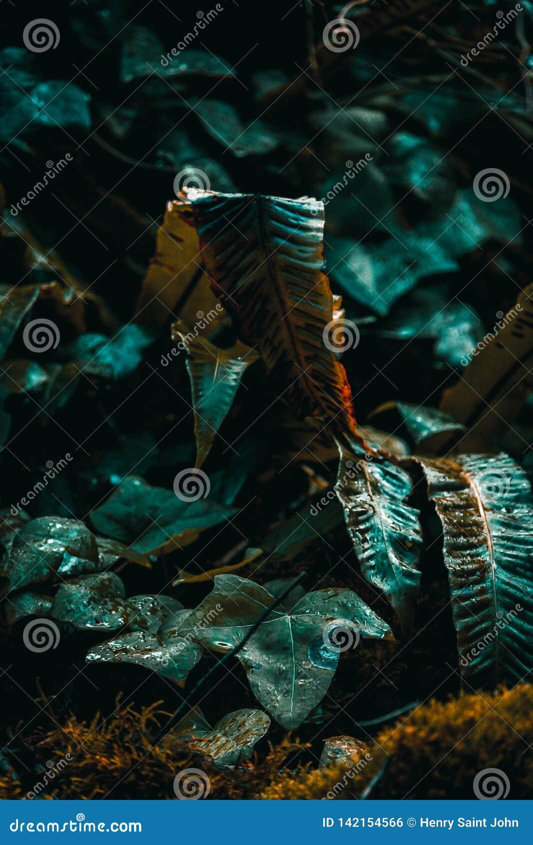 Helecho en luz en bosque