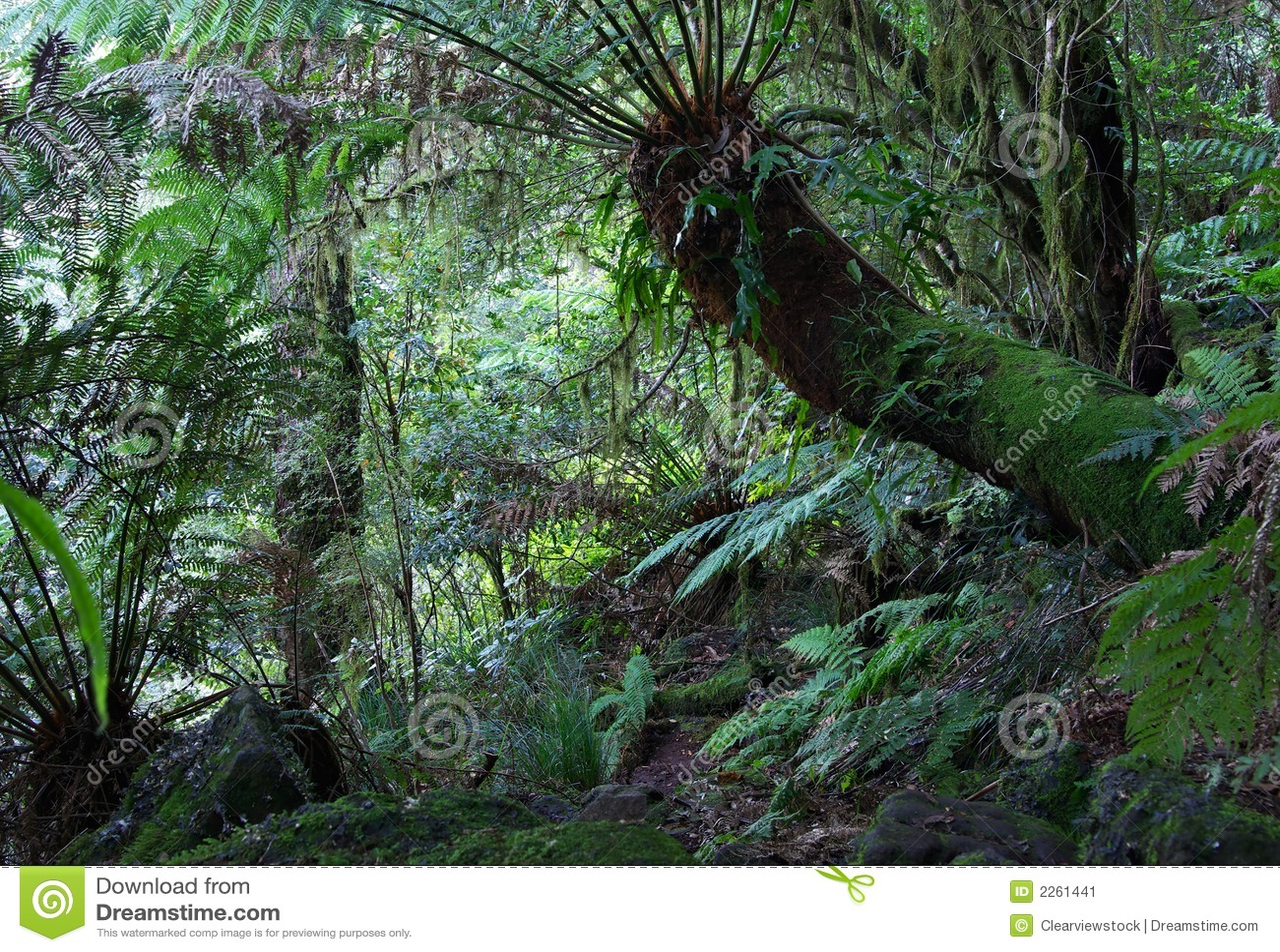 Helechos de la selva tropical imagen de archivo imagen 2261441 - Mas goy fornells de la selva ...