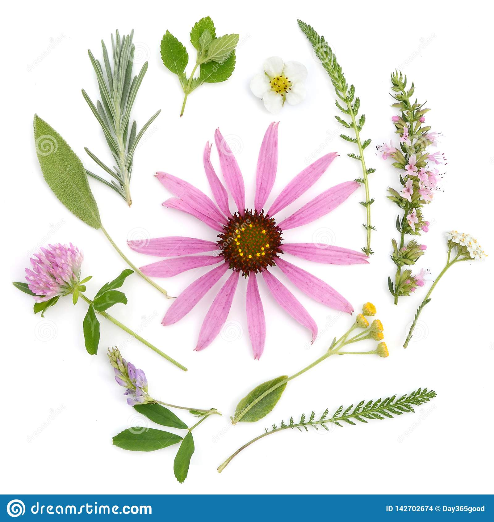 Helende Kruiden Geneeskrachtige installaties en bloemenboeket van echinacea, klaver, duizendblad, hyssop, salie, luzerne, lavende