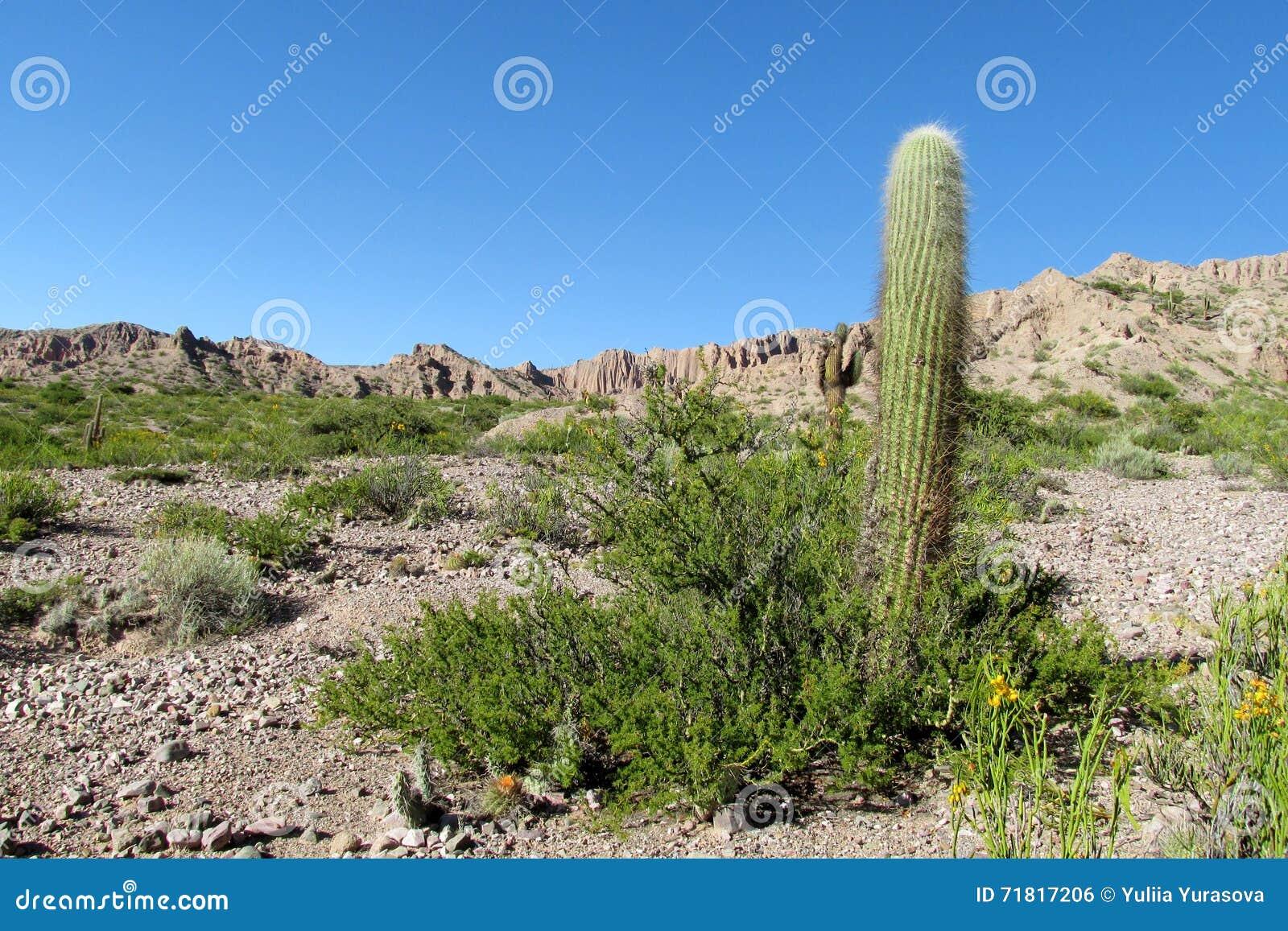Helft-woestijn bergvallei met cactus en struiken
