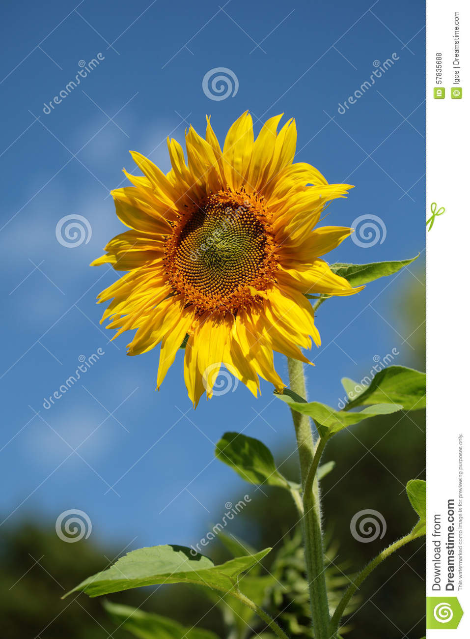 A Sample Sunflower Oil Production Business Plan Template