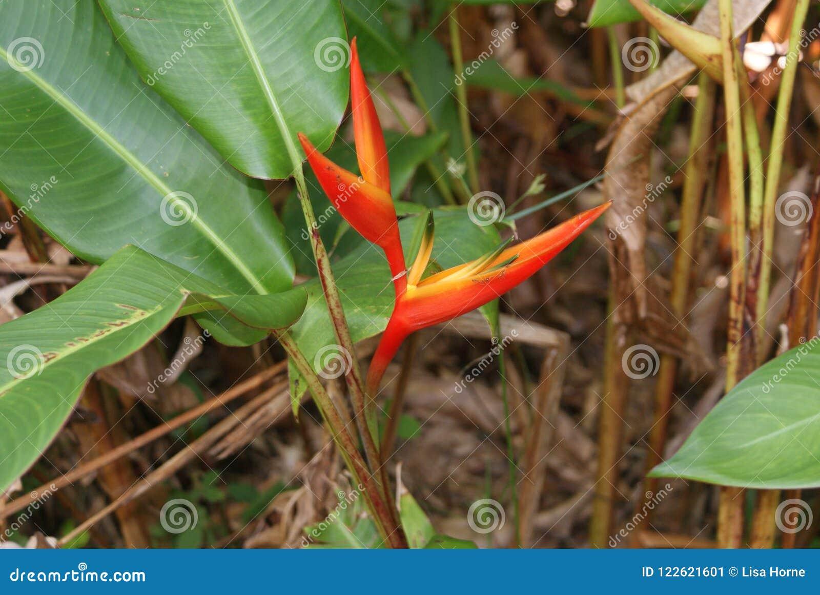Luxury Garden Claw Photos - Beautiful Garden - cutecheapfashion.info