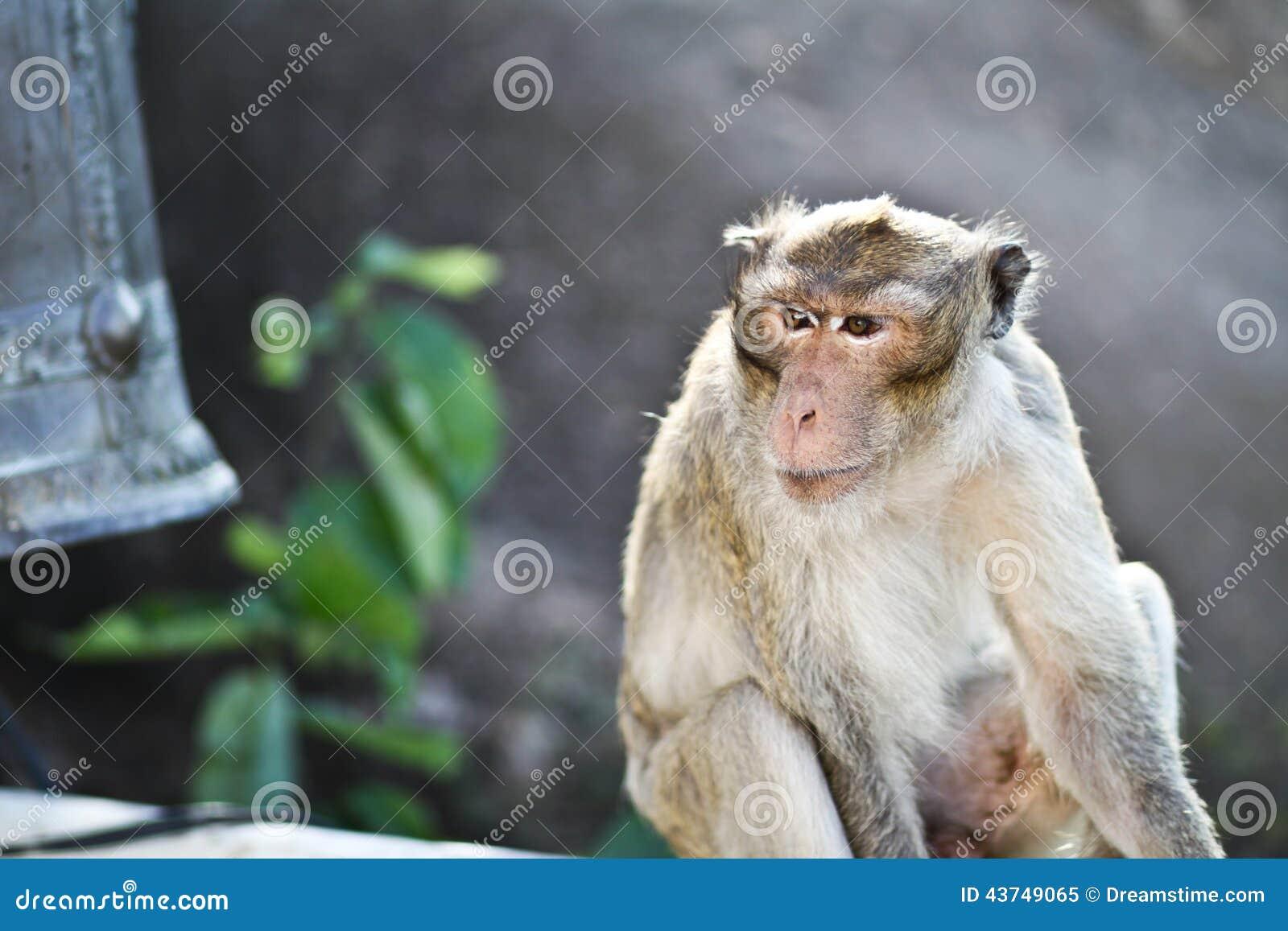 Außergewöhnlich Haustier Affe Dekoration Von P