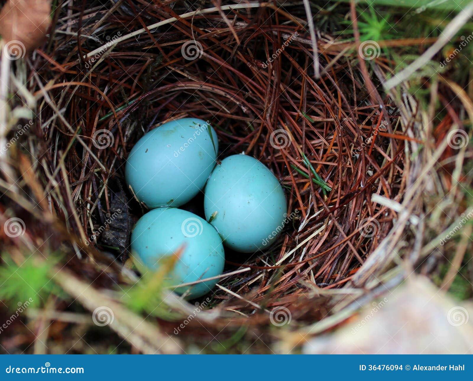 Blaue Eierschale