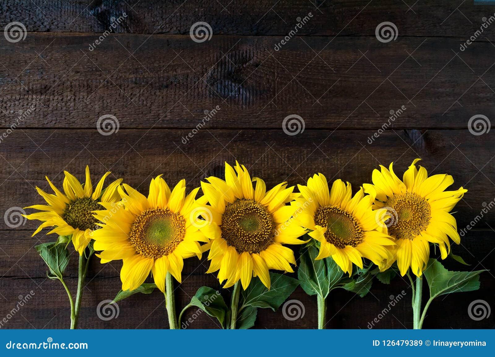 Helle gelbe Sonnenblumen auf hölzernem Brett der natürlichen rustikalen Beschaffenheit