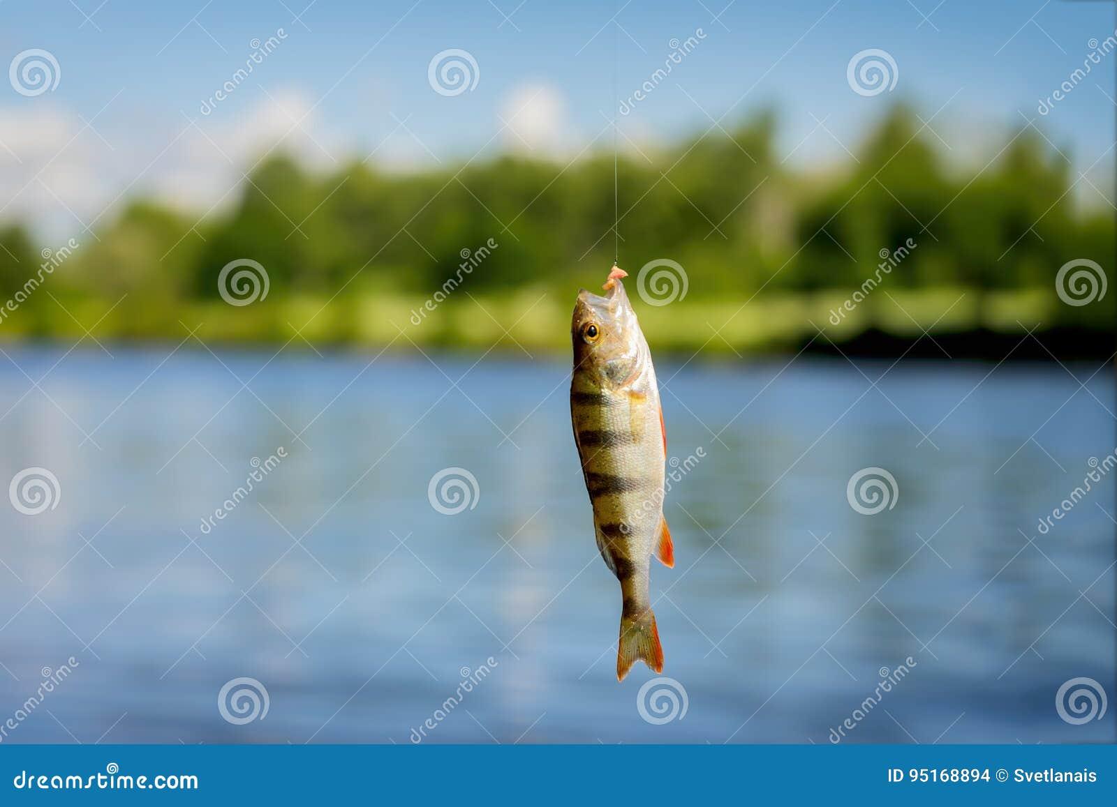 Haken-up-Stange Fisch Dating-Trikot