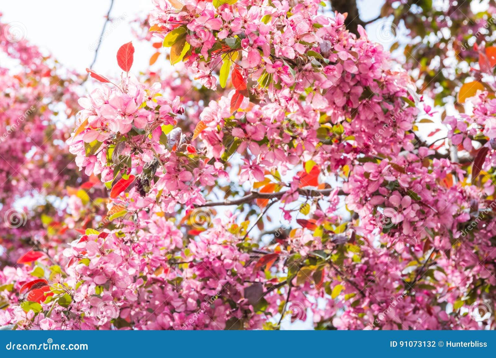 Helle Tagesrosa Blumen Bluhender Fruhling April Colorful Sun Fla