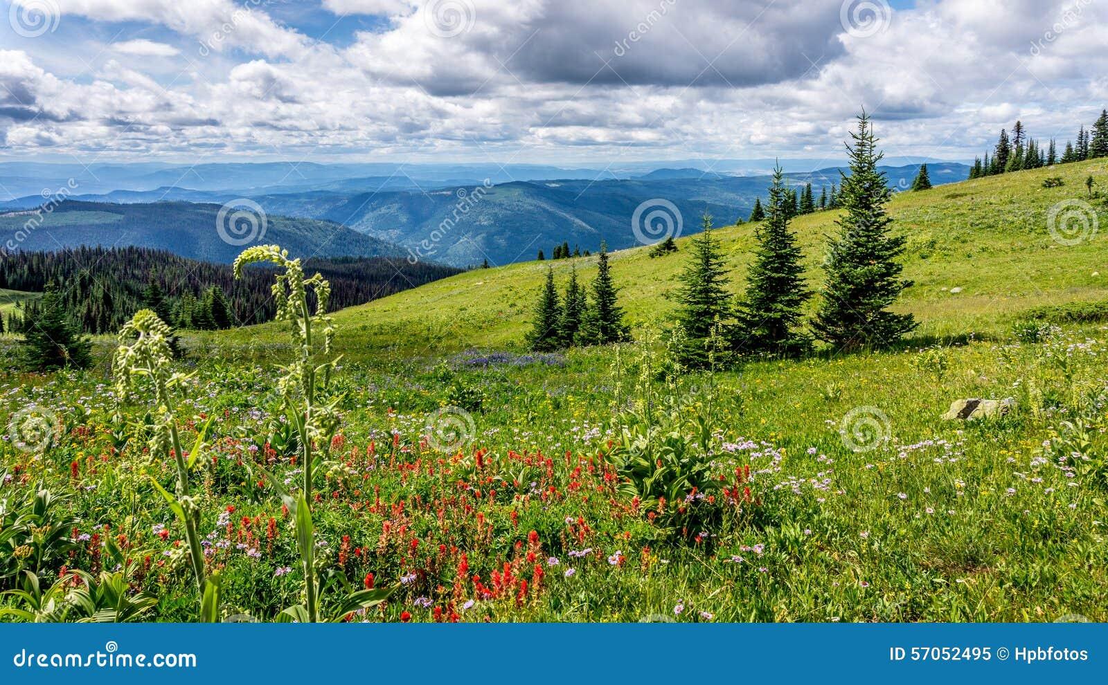 Helleboris, de Indische Verfborstel en andere Wildernis bloeien in Hoge Alpien