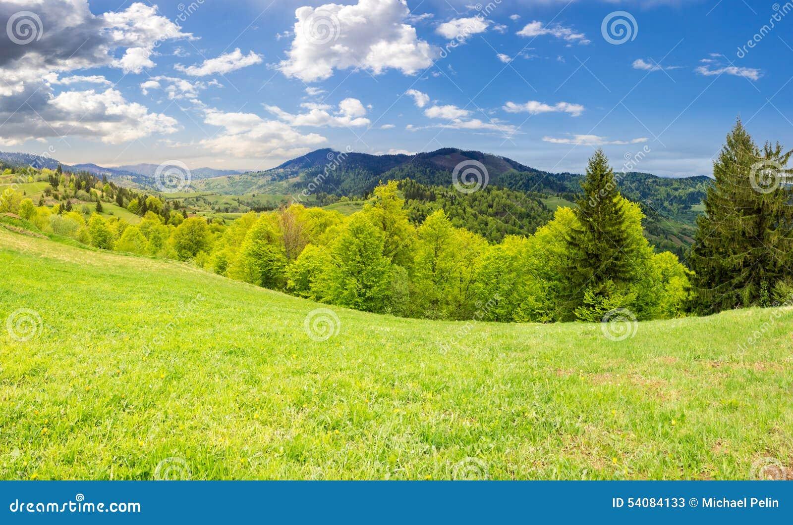 Hellingsweide dichtbij bos in berg