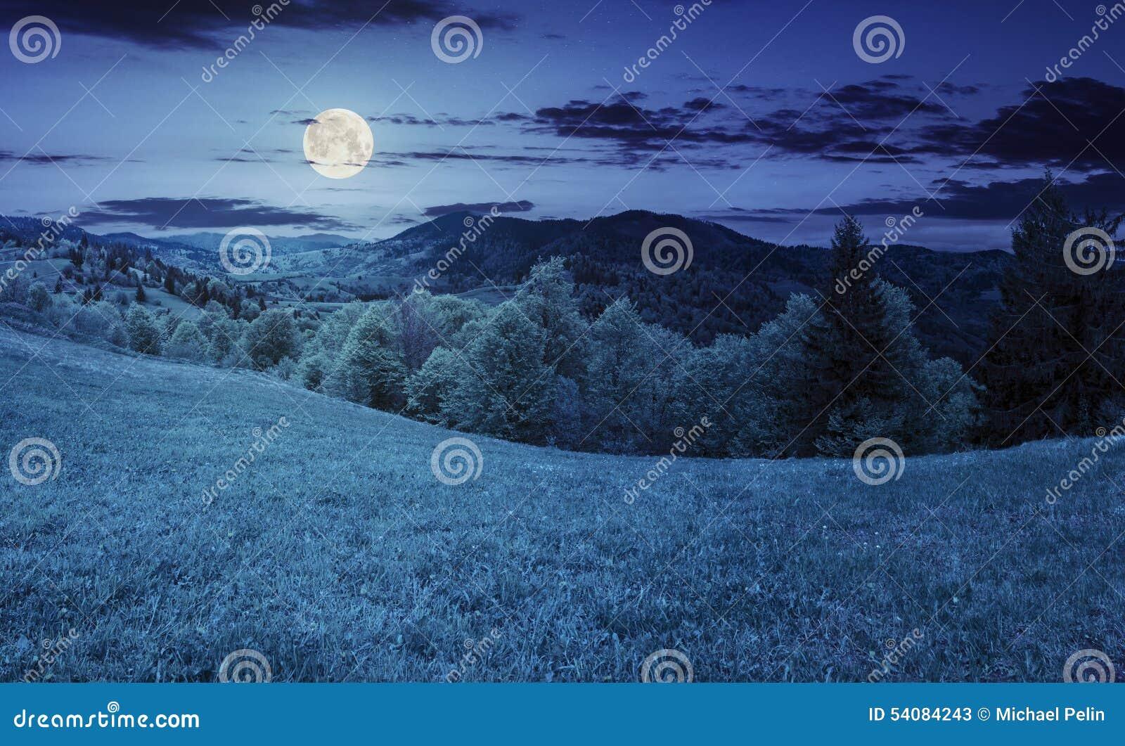 Hellingsweide dichtbij bos in berg bij nacht