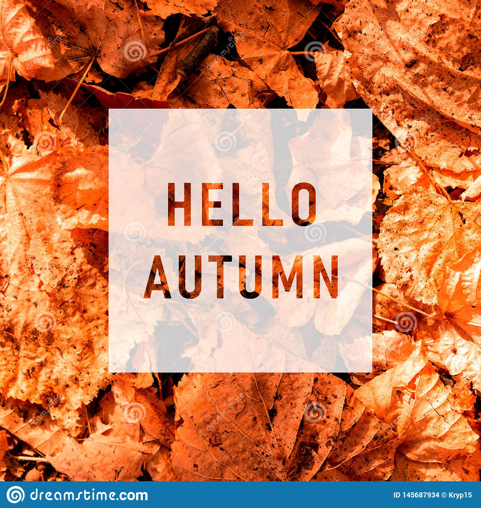 Hello autumn, greeting text on colorful