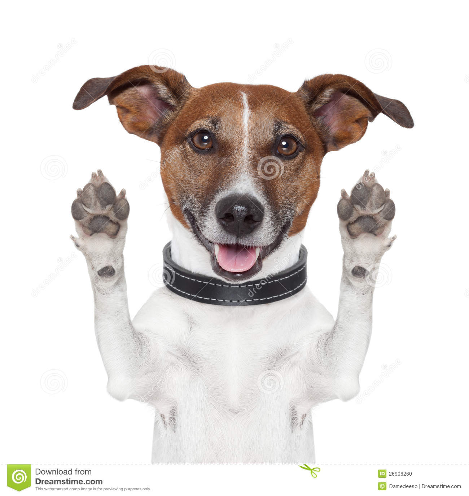 Dog   Hands High