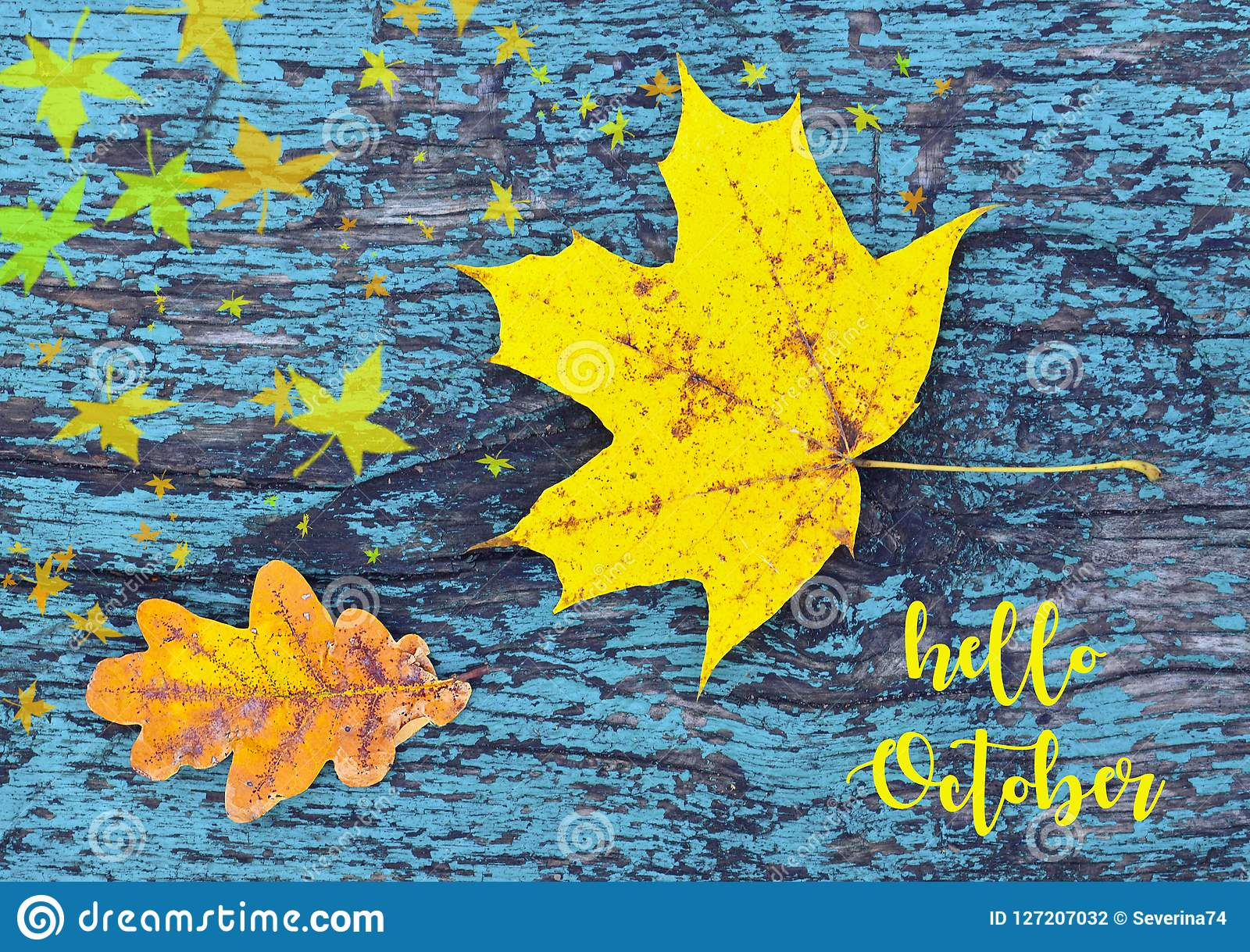 Hello October.Colorful autumn background with autumn leaves on blue colored old wooden texture.Yellow maple and oak tree leaf.Fall