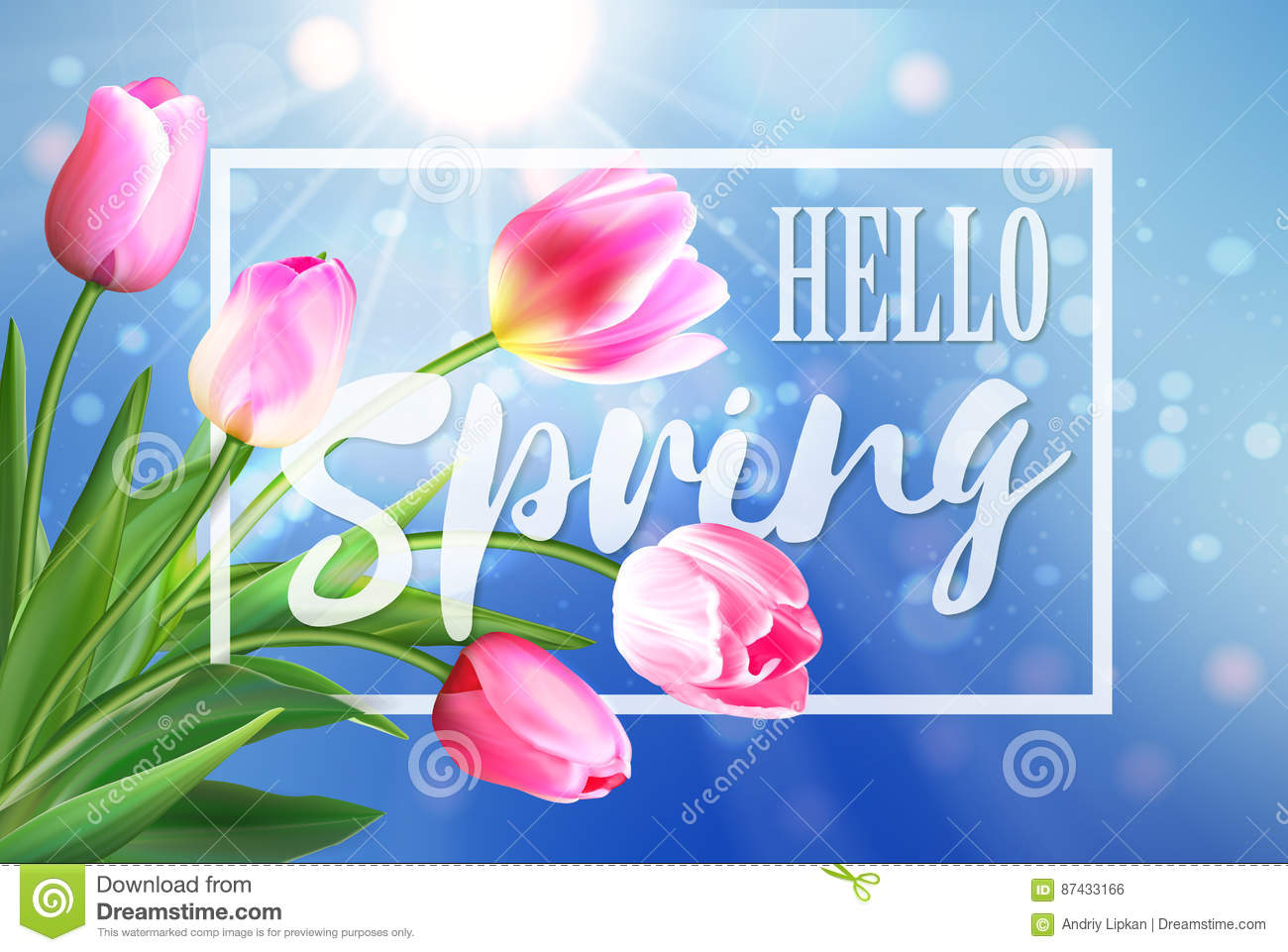 Hello Spring Banner. Greeting Card Background. Tulip Flowers And Lettering. Hello  Spring.